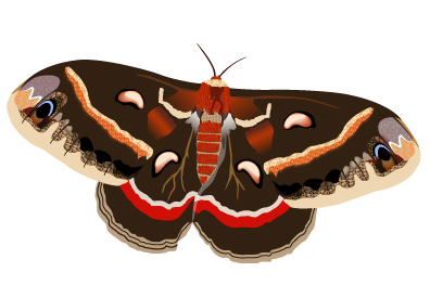 The Moth Illustration, March 2009